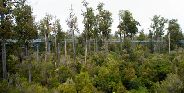 Tree-top walk - https://www.flickr.com/photos/joceykinghorn/13473422433