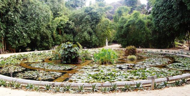 Orto Botanico di Palermo  - https://it.wikipedia.org/wiki/Orto_botanico_di_Palermo#/media/File:Aquarium01_Orto_botanico_Palermo.jpg