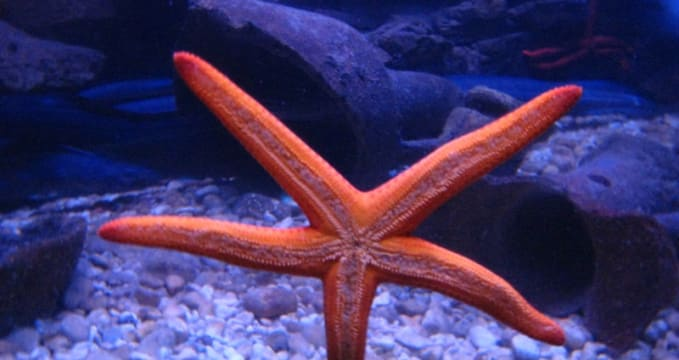 Mořské akvárium v Dubrovníku - https://www.flickr.com/photos/mollyali/684248408/in/photolist-23oxuK-23sXiE-23sXdm-23oxAM-23oxGR-p1jJbC-35Fvxg-35Fug6-awizHx