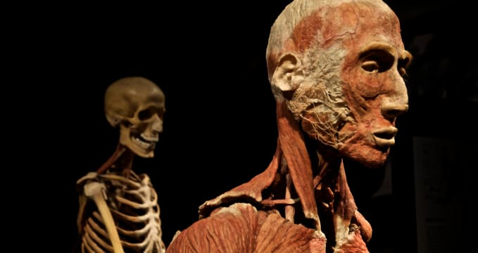 Výstava BODY WORLDS - https://www.flickr.com/photos/pierluigiluceri/11330018966/
