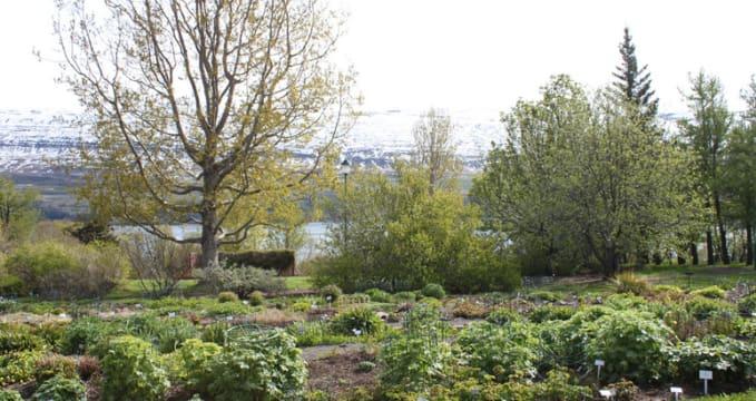Botanická zahrada Lystigarður Akureyrar - https://www.flickr.com/photos/54082265@N05/5986866502/