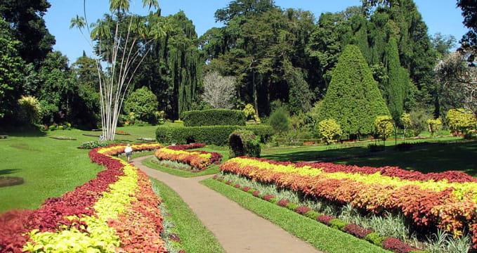 Botanická zahrada Paradeniya  - https://en.wikipedia.org/wiki/Royal_Botanical_Gardens,_Peradeniya#/media/File:Botanical_Garden_of_Peradeniya_03.jpg