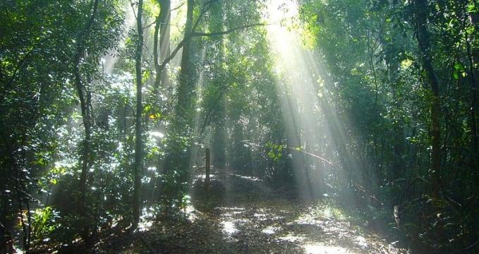 Prales Udawattakele  - https://commons.wikimedia.org/wiki/File:Udawattakele_Forest_scene_5.jpg