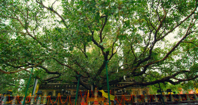Jaya Sri Maha Bodhi  - https://www.flickr.com/photos/lakpura/16666416769