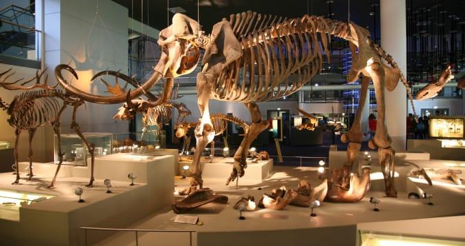 Přírodovědné muzeum - https://www.flickr.com/photos/bertknot/8139509906/