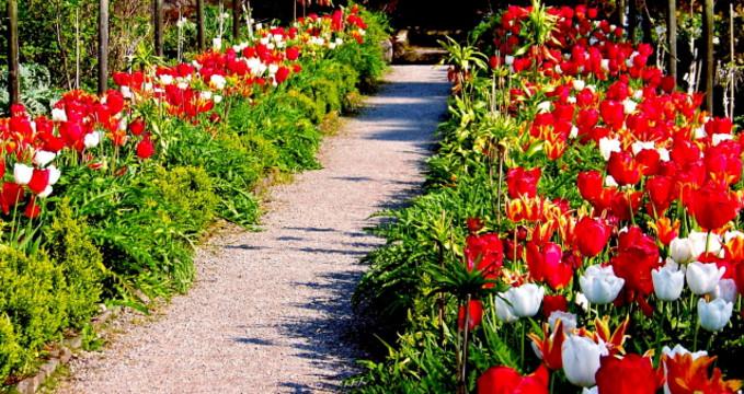 Glenveaghské zahrady  - https://commons.wikimedia.org/wiki/File:Glenveagh_National_Park_-_Flowers_in_Walled_Garden_-_geograph.org.uk_-_1189246.jpg