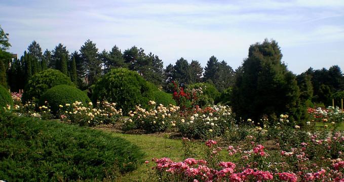 Botanická zahrada v Jasy - https://commons.wikimedia.org/wiki/File:Ia%C5%9Fi_,_Gr%C4%83dina_Botanic%C4%83_5.JPG?uselang=cs