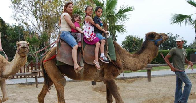 Camel Park Mazotos - http://www.camel-park.com/