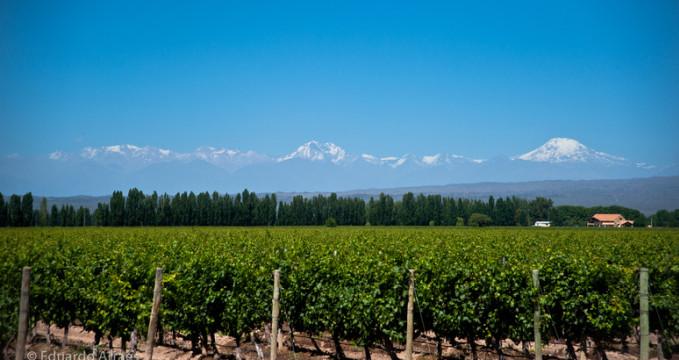 Vinařství v provincii Mendoza v Argentině - https://www.flickr.com/photos/duda_arraes/10885112464