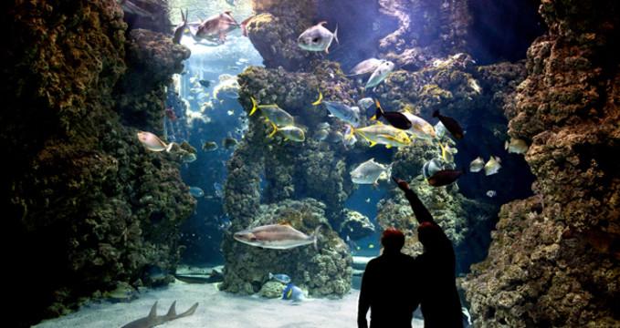 Oceánografické muzeum - http://www.oceano.mc/fr/aquariums/le-lagon-aux-requins
