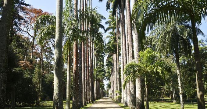 Jardim Botânico do Rio de Janeiro - https://www.flickr.com/photos/armandolobos/9526256725/
