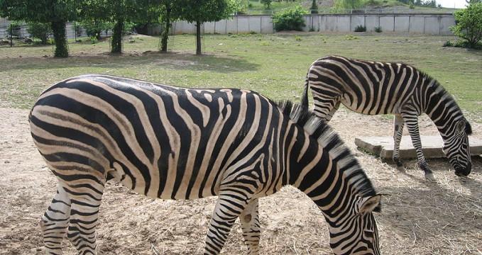 Zoo Košice - https://commons.wikimedia.org/wiki/File:Ko%C5%A1ice_ZOO_6.jpg?uselang=cs
