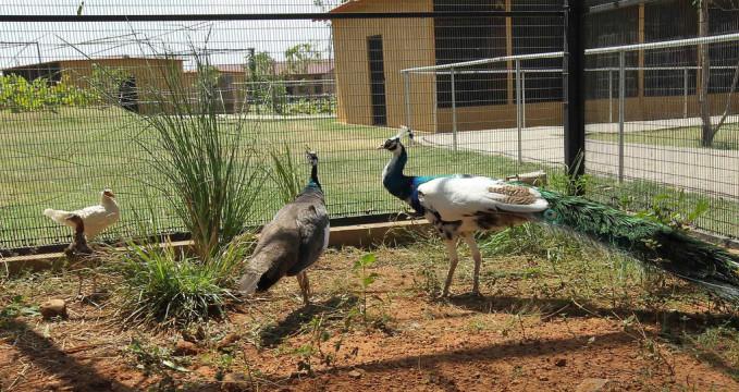 Ptačí výzkumné centrum  - https://www.flickr.com/photos/presidentrajapaksa/13460953354/