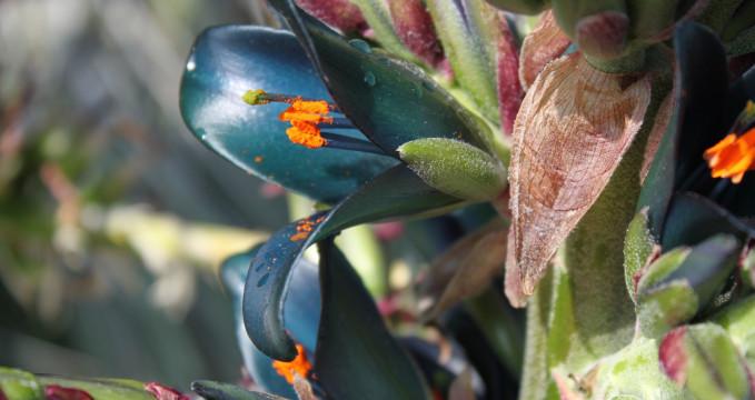 Botanická zahrada  - https://www.flickr.com/photos/col_and_tasha/7263129524/in/photolist-weFpYb-fFnjiE-fF5HhP-6Cyhbx-c4Prn7-c4PKK3-5m7Bx4-a1uXTu-fF5GGz-otvAH-c4PMsW-pyhi8j-c4PyAu-c4PpS3-c4PLBo