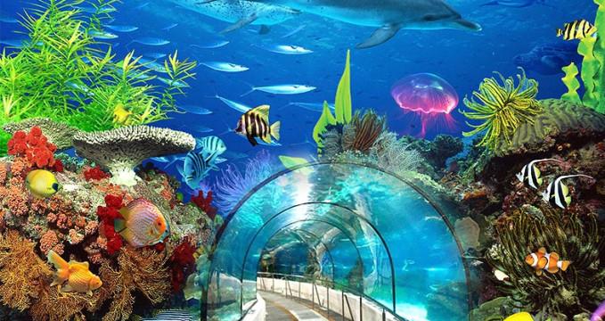 Podmořský svět - http://www.beijing-haidian.com/2015/1204/34831.html
