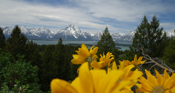 Jackson Lake -