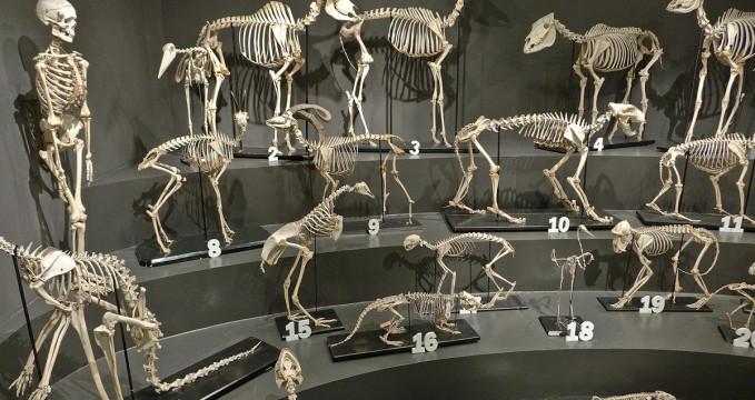 Přírodovědecké muzeum - http://www.triestecultura.it/luoghi/index/id/50/#