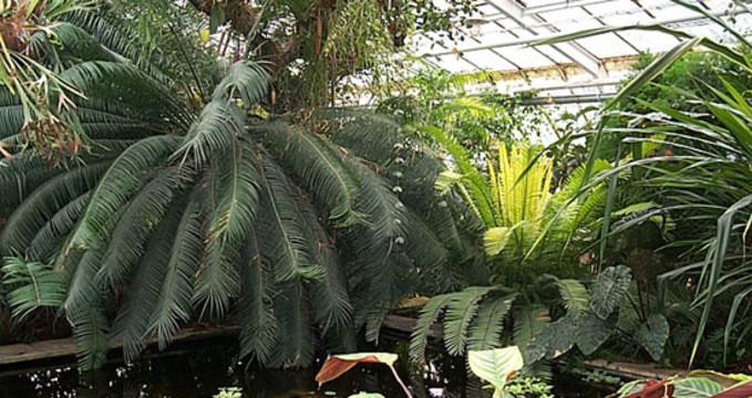 Botanická zahrada Košice - https://upload.wikimedia.org/wikipedia/commons/d/df/Botanick%C3%A1_Z%C3%A1hradaKo%C5%A1ice.jpg