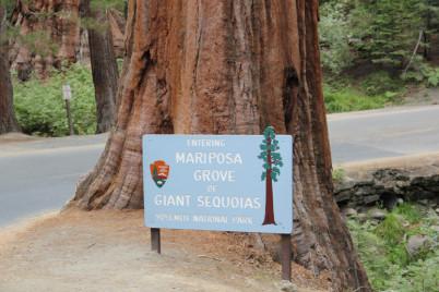 Mariposa Grove - https://www.flickr.com/photos/daveynin/6297117018