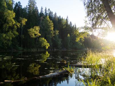 Národní park Helvetinjärvi - https://www.flickr.com/photos/fubsan/9693880511/