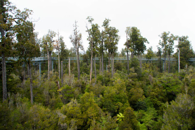 Tree-top walk - https://www.flickr.com/photos/joceykinghorn/13473422433