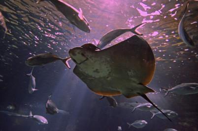 Akvárium - https://www.flickr.com/photos/wm_archiv/5546454016/