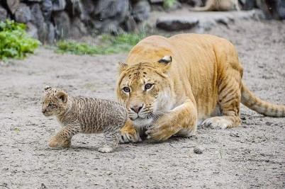 Zoo Novosibirsk - https://www.flickr.com/photos/80868612@N03/11575004274/i