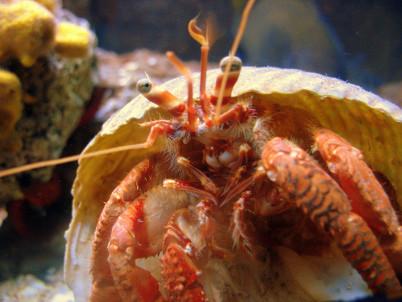 Pulské akvárium - https://www.flickr.com/photos/ptralb/2828062694/in/photolist-5iUyvC-6ez4Vw