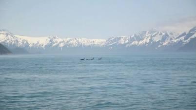 Kenai Fjords NP -