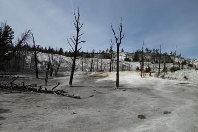 Mammoth Hot Springs -