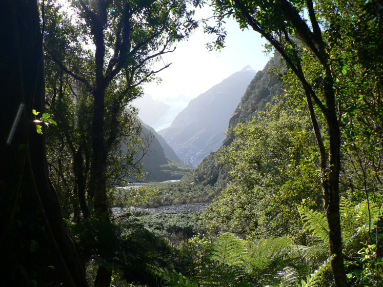 Pralesy na Jižním ostrově