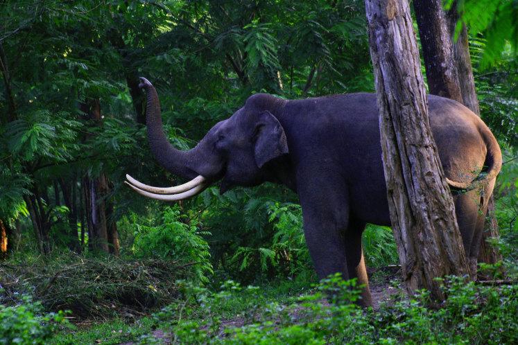 Přírodní rezervace Muthanga Wildlife Sanctuary v Wayanad