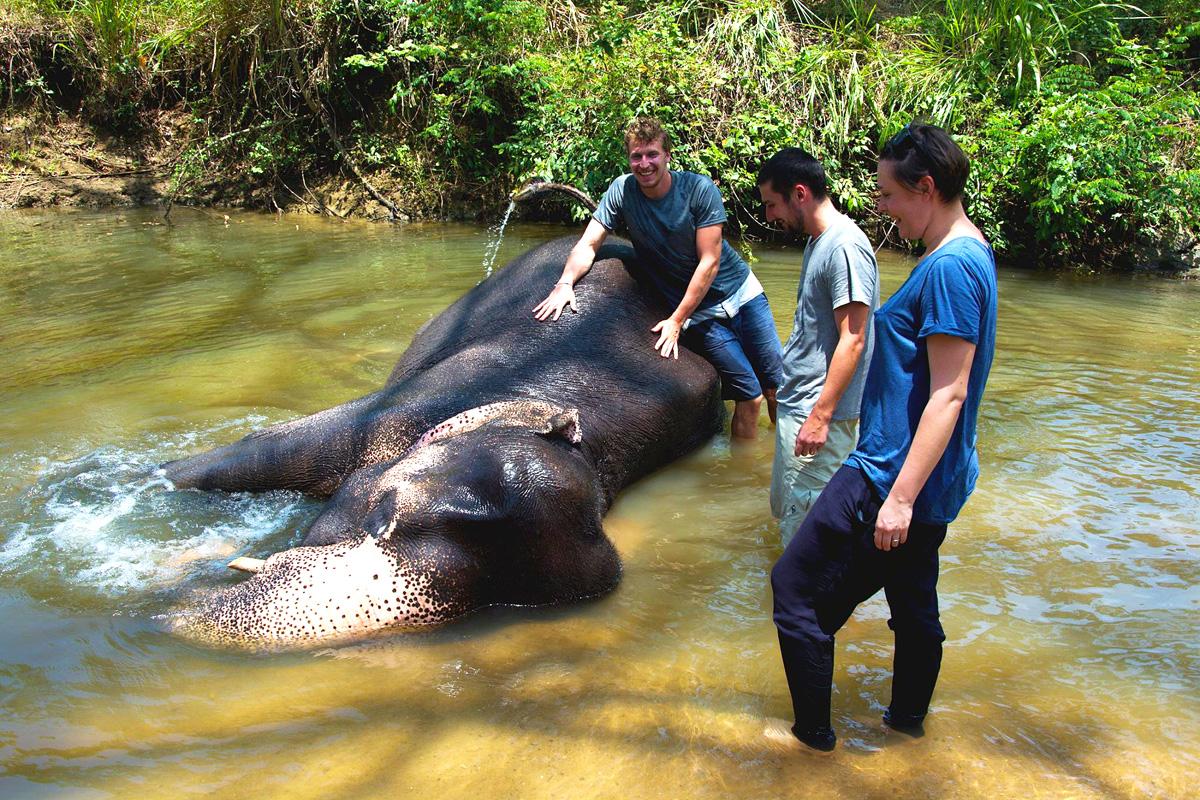 Koupání slona v řece