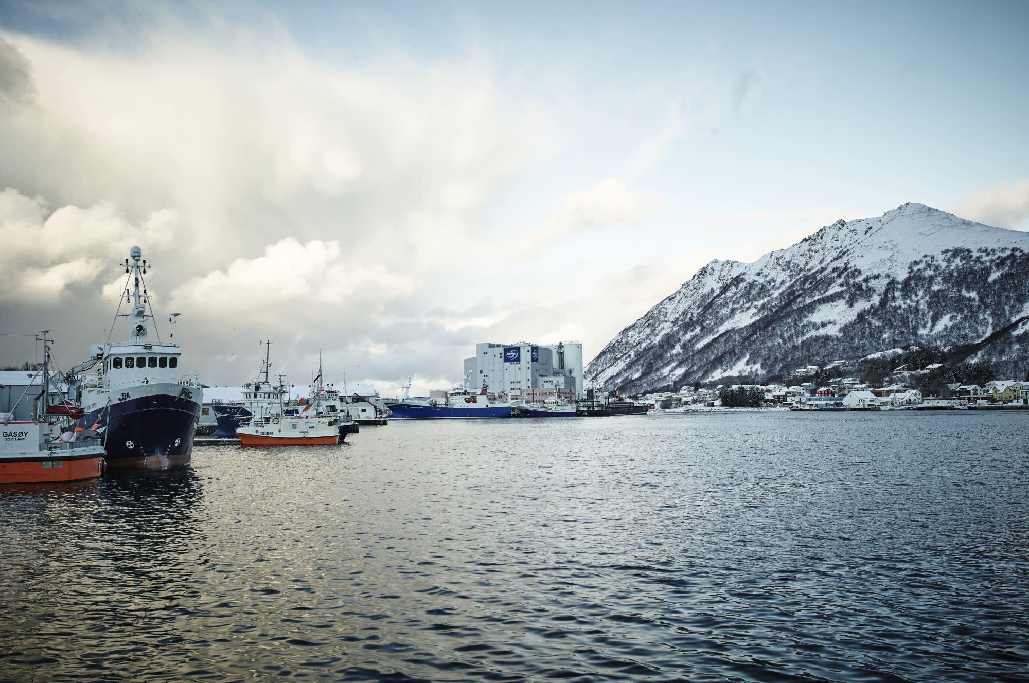 Havn ved fjell med båter og fabrikk.