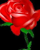 rose-31411__180