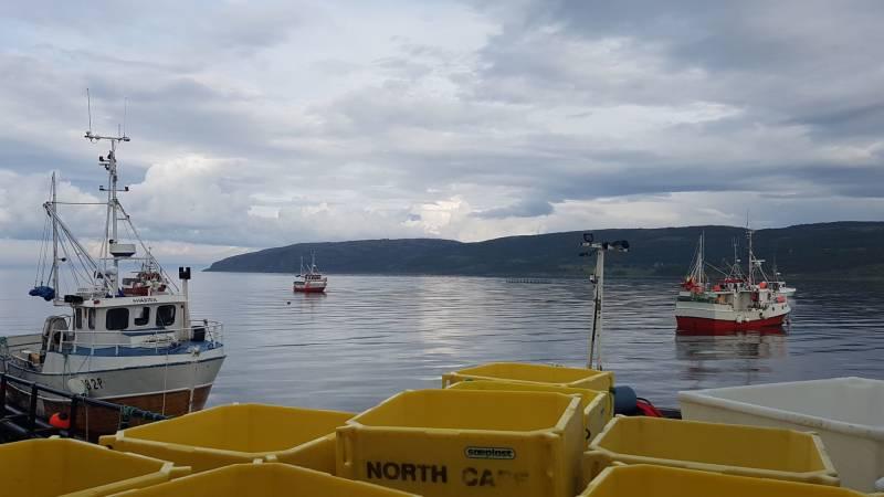 Fiskebåter i Billefjord
