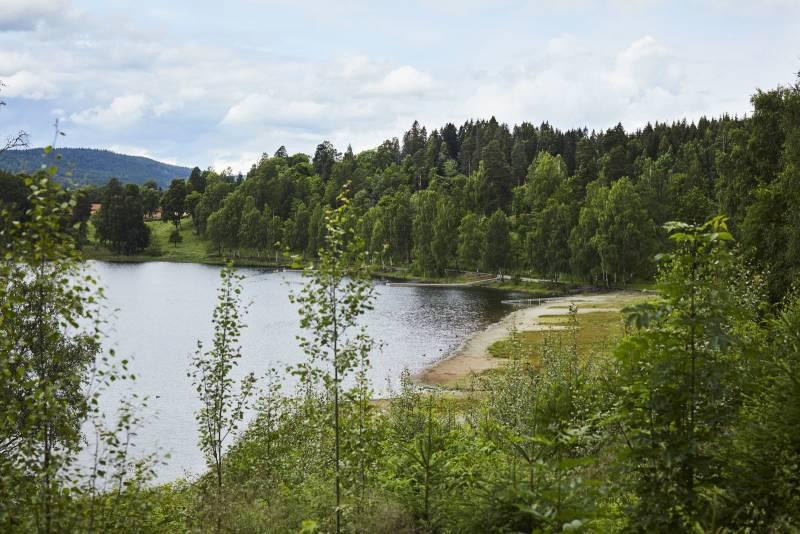 Oversiktsbilde av et rolig skogsvann, omgitt av trær. Foto: Øivind Haug