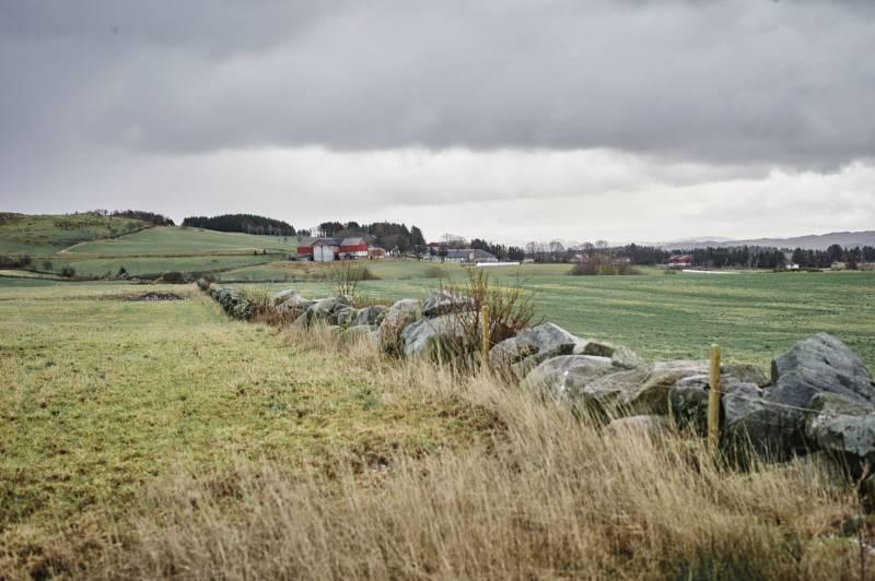 Et steingjerde strekker seg langs en åker, grønn på den ene siden og gul på den andre, langt borte er det en gård. Foto: Øivind Haug