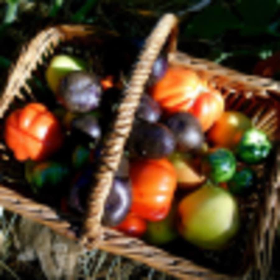 Initiation à la permaculture - Association Humus