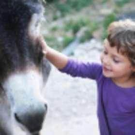 Nos amis les ânes - Association Liane