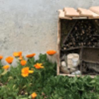 Les insectes au jardin - Atelier EcoCréa