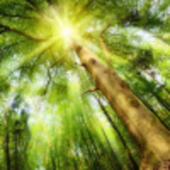 """Bain de Forêt """"La Célébration"""" - Réveille Ton Soleil, Valérie Bourne"""
