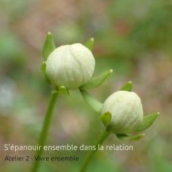 ArboLIfe-events-Laurence-Brillant-Sepanouir-ensemble-dans-la-relation-atelier-2
