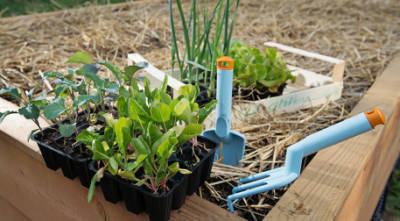 ArboLife-events-association-liane-permaculture