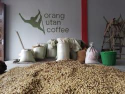 ArboLife-events-Magasin-du-monde-Orang-Utan-Orang-Utan-Coffee