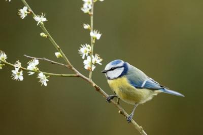 ArboLife-events-Association-Liane-Oiseaux-enchantes