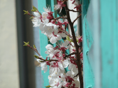 ArboLife-events-fleurs-deveil-portes-ouvertes-printanieres