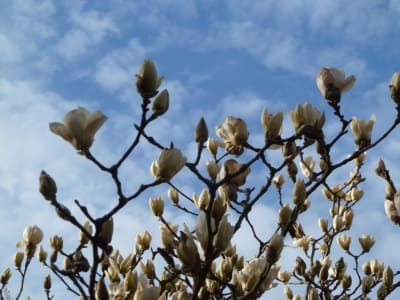 ArboLife-events-fleur-deveil-magnolia-activites