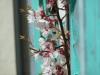 ArboLife-events-fleurs-deveil-la-construction-du-monde