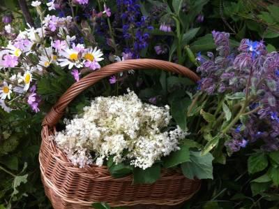 ArboLife-events-nadine-plantes-sauvages-balade-et-apero-sauvage-11-06-17